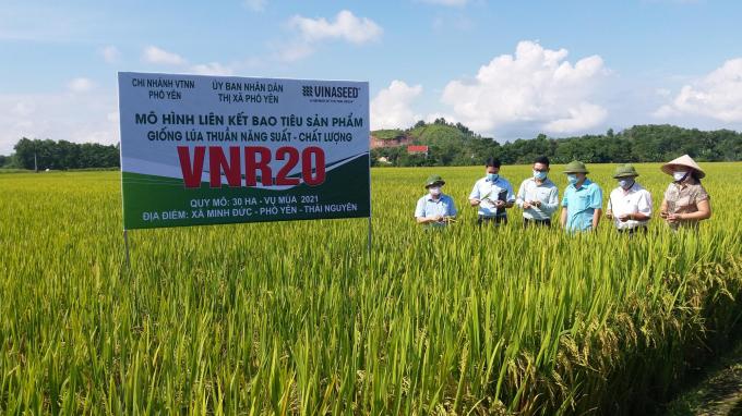 Đồng hành cùng người Sán Dìu sản xuất chuỗi lúa VietGAP